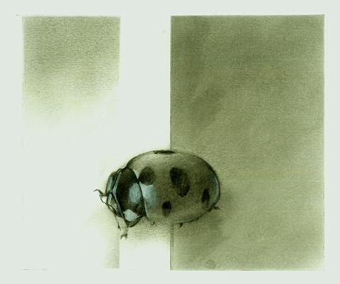 Haiku-ladybug.jpg