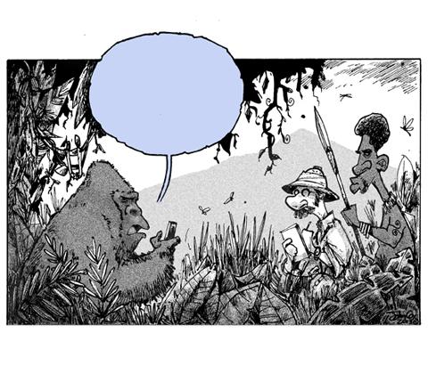 SW-Jungle.jpg