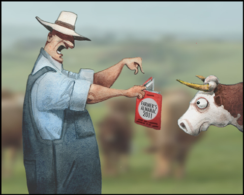 SW-cow.jpg