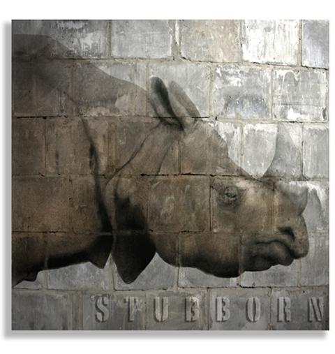 Stubborn.jpg